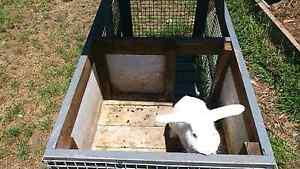 Rabbit hutch and rabbits Canterbury Canterbury Area Preview