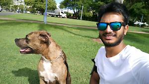 Rental wanted - dog friendly Parramatta Parramatta Area Preview