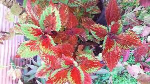 PLANT SALE THIS WEEK FROM $2 Marsden Logan Area Preview