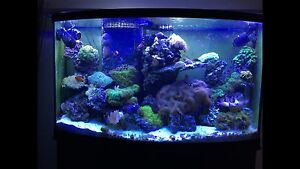 90 gallon bowfront reef tank complete with rock and coral