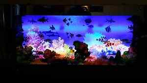 Light Up Fish Tank Frame Andrews Farm Playford Area Preview