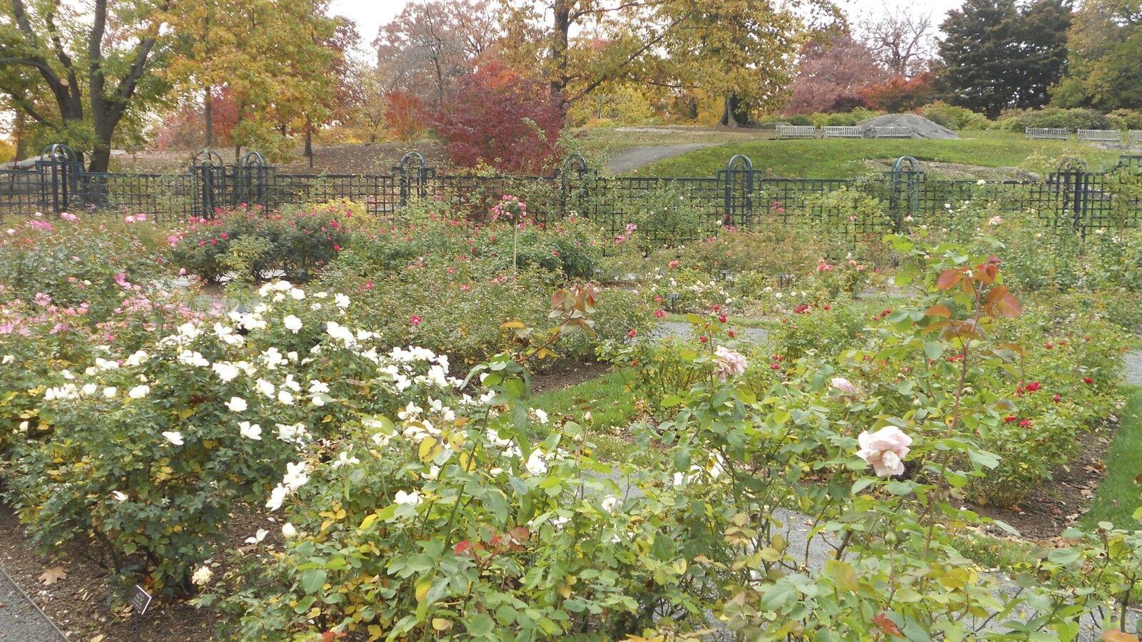 polkadotflowers