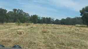 Paddock hay, phalaris, oat & rye small squares Bendigo Bendigo City Preview