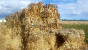 Lucerne and rye grass hay for sale Melton Melton Area Preview