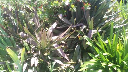 Free spikey plants