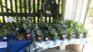 healthy plant sale Slade Point Mackay City Preview