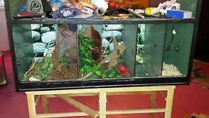 Reptile display tank for sale