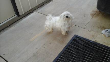 Lost dog canley heights