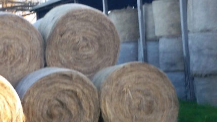Hay for sale 5×4