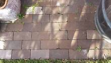 Clay Pavers 230 x 110 x 50 - 820 available Newcastle Newcastle Area Preview