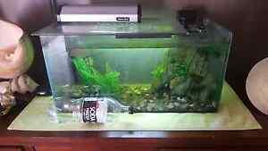 Fish tank with 3 angel fish Bunbury Bunbury Area Preview