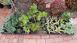 PLANT SALE! Nothing over $5!! Doncaster East Manningham Area Preview