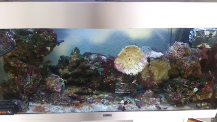 Salt water fish tank aquarium
