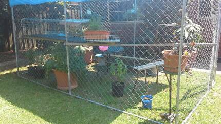 Kingsgrove Cats              Cat boarding