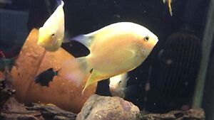 fish for sale  all together Noble Park Greater Dandenong Preview