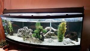 2 large 155 gallon fish tanks for sale