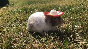 YOUNG FEMALE HAMSTER WITH ACCESSORIES