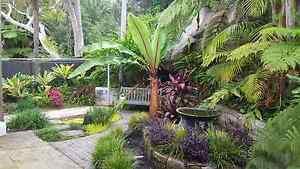 Lawn and garden care Strathfield Strathfield Area Preview