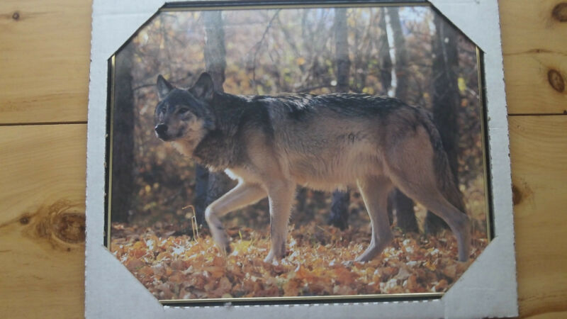 Grey Wolf Print & Whitetail Buck Print-NIP