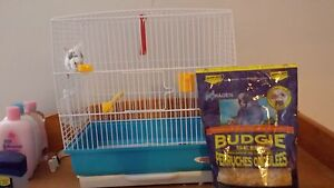 beautiful blue and white budgie