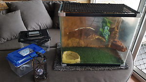 Reptile tank Macquarie Fields Campbelltown Area Preview