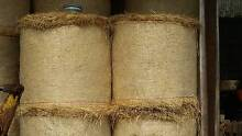 4ft round fine cut rhodes grass bales of hay Lismore Area Preview