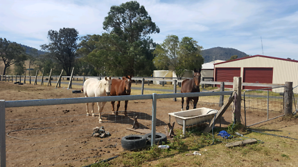 X3 Horses for sale