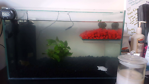 X2 baby Short neck turtles and tank Brahma Lodge Salisbury Area Preview