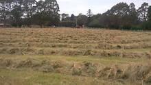 Hay - Grass - Small Squares Burnie Burnie Area Preview