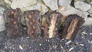 Tree Fern Log Planter Board Upper Ferntree Gully Knox Area Preview