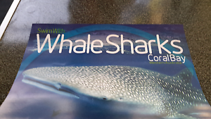 Swim With Whale Shark Tickets Learmonth Exmouth Area Preview