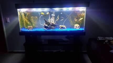 Aquarium +