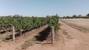 WINE  GRAPES  ON  THE  VINE  $5000 . Moorook South Loxton Waikerie Preview