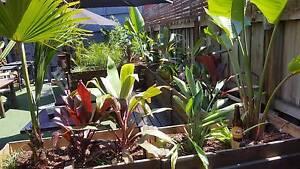 DPL Garden Maintenance and Landscapes Collingwood Yarra Area Preview