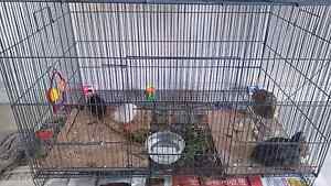 4 Quails for sales includes cages. Bull Creek Melville Area Preview