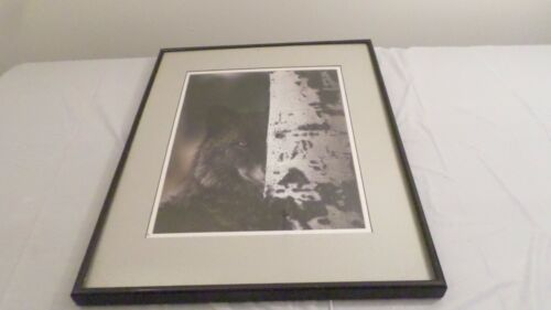 """16.25 x 20.25"""" Framed Wolf Print Wall Hanging"""
