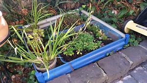 BLUE STEEL GARDEN BED Sandringham Bayside Area Preview