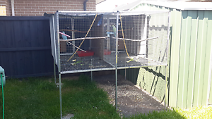 Double bay avery with 2 pairs of indian ringnecks Hoxton Park Liverpool Area Preview