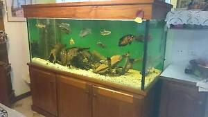 Custom Tank with Fish for Sale Russell Lea Canada Bay Area Preview