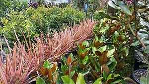 Plants! Plants! Plants! Springwood Logan Area Preview