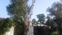 Professional Tree Removal Affordable Prices