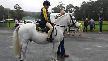 Ultimate beginners pony Launching Place Yarra Ranges Preview