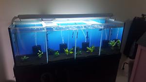 Shrimp breeding setup Glenmore Park Penrith Area Preview