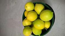 bag of lemons Stirling Stirling Area Preview