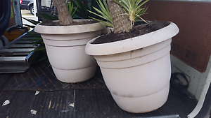 Looking for free large pots (without plants) Edgewater Joondalup Area Preview