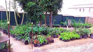 CHEAPE PLANTS FOR SALE - FROM $2 Marsden Logan Area Preview
