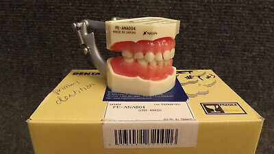 Kilgore I3d-400d Pe-ana004 Primary Anatomical Tooth Model New Typodont 200