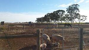 Life style/horse hobby farm ,huge home below valuation Shepparton Region Preview