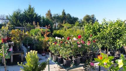 HUGE PLANT SALE EVERY FRI, SAT & SUN 9AM TO 5PM PRICES FROM $5.90