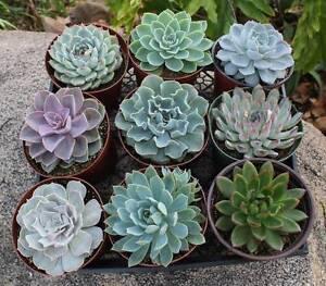 Plant Extravaganza Sale Kew Boroondara Area Preview